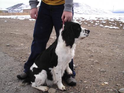 Rocky Mountain Springer Spaniels