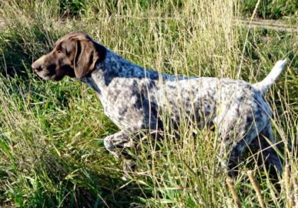 Grassridge Regd