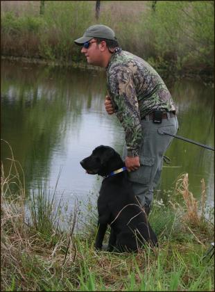 Timber Creek Gun Dogs