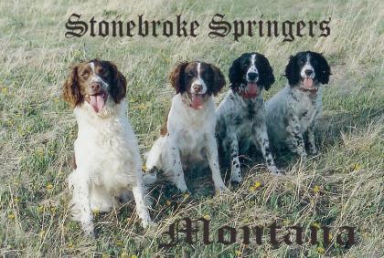 Stonebroke Kennels