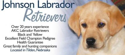 Johnson Labrador Retrievers