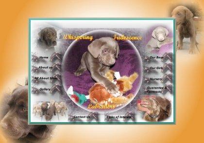 Whispering Iridescence Labradors