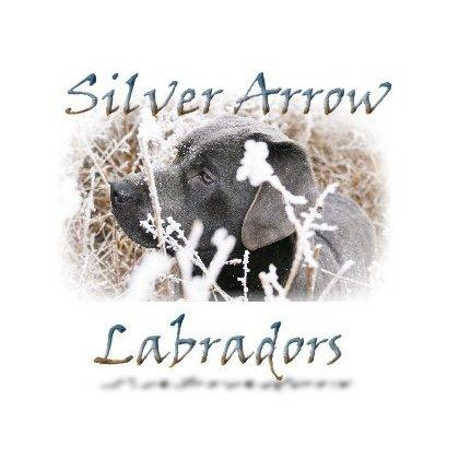 Silver Arrow Labradors
