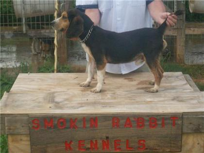 SMOKIN RABBIT KENNELS