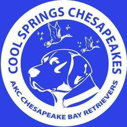 Cool Springs Chesapeakes