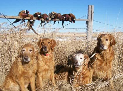 Gold Eagle Retrievers