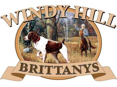 WINDY HILL BRITTANYS