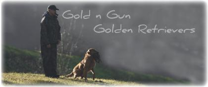 GoldnGun Retrievers