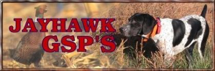 Jayhawk German Shorthaired Pointers