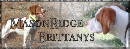 MasonRidge Brittanys