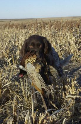OAHE WINGSHOOTER KENNEL & EEHUNTS