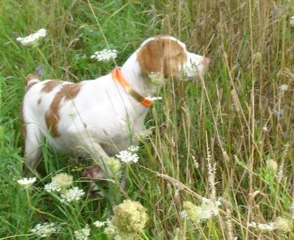 Rick's Brittany Kennel