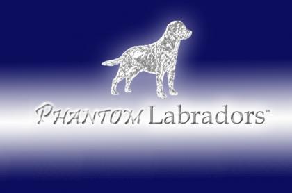 Phantom Labradors