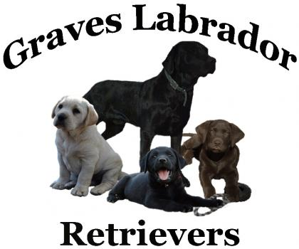Graves Labrador Retrievers