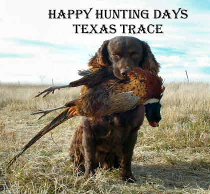 Texas Trace Boykin Spaniels