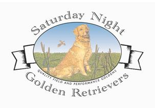 Saturday Night Golden Retrievers