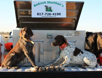 Bedrock German Shorthairs