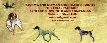 STORMWYND GERMAN SHORTHAIRED POINTERS
