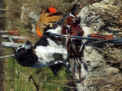 Blackbrook Springers Kennel