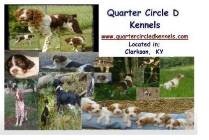 Quarter Circle D Kennels