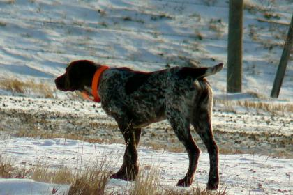 Bevans Pointers