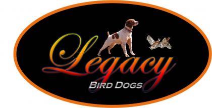 Legacy Brittanys