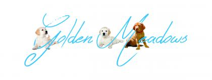 Golden Meadows Kennels