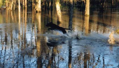 DogCreek Waterdogs