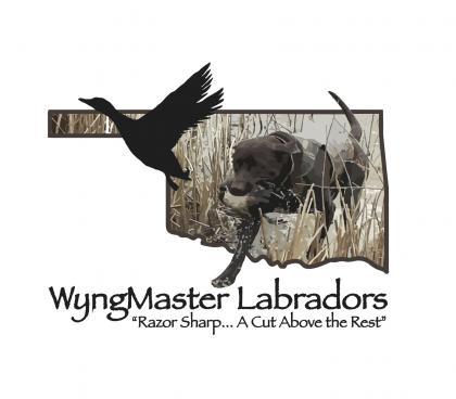 WyngMaster Labradors (Est. January, 2000)