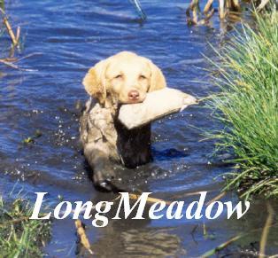 LongMeadow Kennels *GUN Dog AKC Breeder of Merit*
