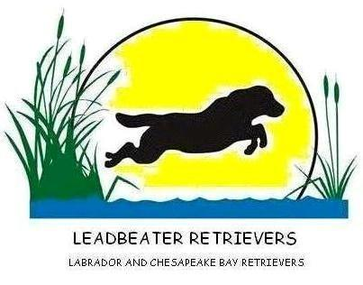 Leadbeater Retrievers
