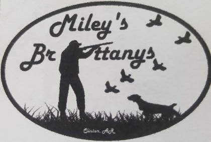 Miley's Brittanys