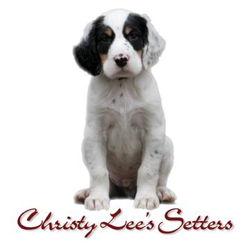 Christy Lee's Setters