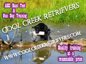 Cool Creek Retrievers