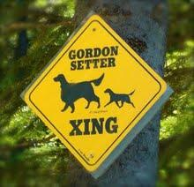 Sure Thing Gordon Setters Kennel