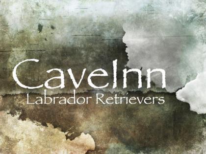 CaveInn Labradors