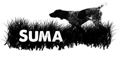 Suma German Shorthaired Pointers