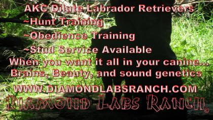 Diamond Labs Ranch