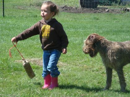 Fogarty's Wirehaired Kennel