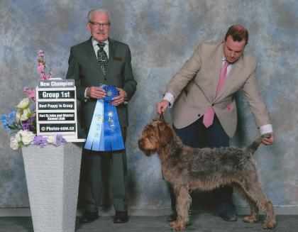 Razorsedge Wirehaired Pointing Griffons