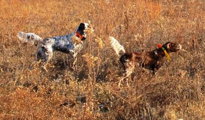 Docs Bird Dogs