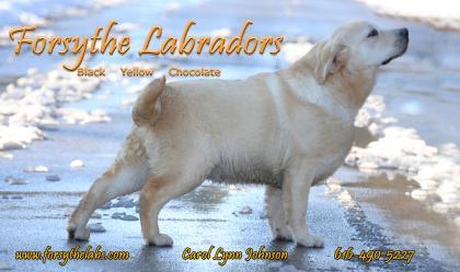 Forsythe Labradors