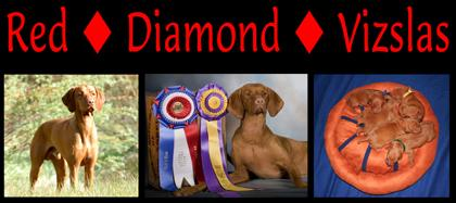 Red Diamond Vizslas