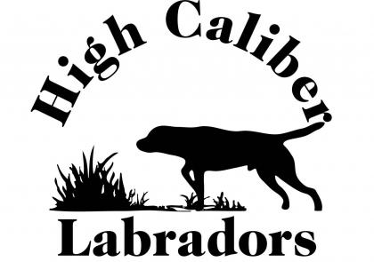 High Caliber Labradors