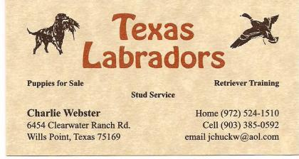 Texas Labradors by Webster