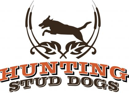 Hunting Stud Dogs.com