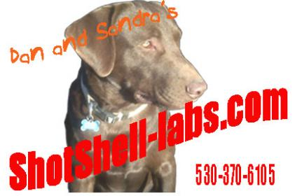 ShotShell labs