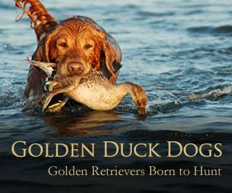 Golden Duck Dog