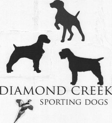 Diamond Creek Sporting Dogs
