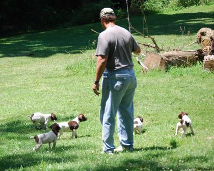 german-shorthair-pointers.com